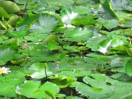 Where's waldo frogs